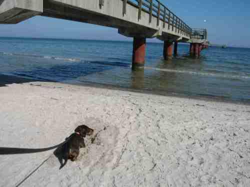 Da kann man begeistert Sandteufel ausgraben - oder es zumindest versuchen.