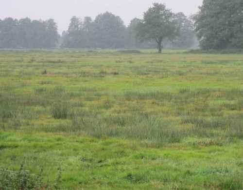 Viele Grüntöne im Naturschutzgebiet Obere Wümmeniederung