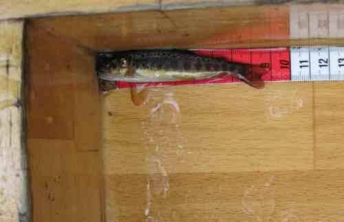 Sehr schön - viele kleine Fische. Die Eigenvermehrung klappt.