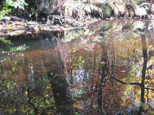 IMG_0337 - Umlaufgraben-Bäume falschrum