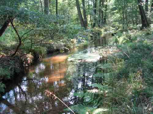 Der ehemals überbreite, öde Sandkanal im Erlenbruch wird durch diese steckholzgestützte Stromstrichentwicklung zunehmend wieder zum vielfältigen Lebensraum.