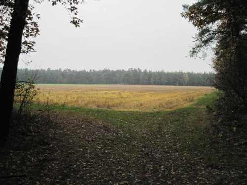 IMG_0417 - flächig Herbstfarben nach Agrarier-Art