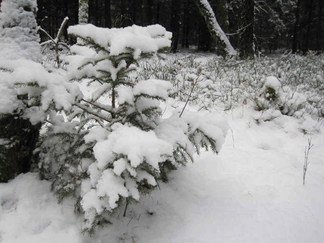 vorweihnachtlich schnee verwandelt die landschaft. Black Bedroom Furniture Sets. Home Design Ideas