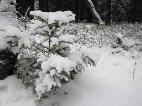 vorweihnachtlich schnee verwandelt die landschaft osmerus 39 blog. Black Bedroom Furniture Sets. Home Design Ideas