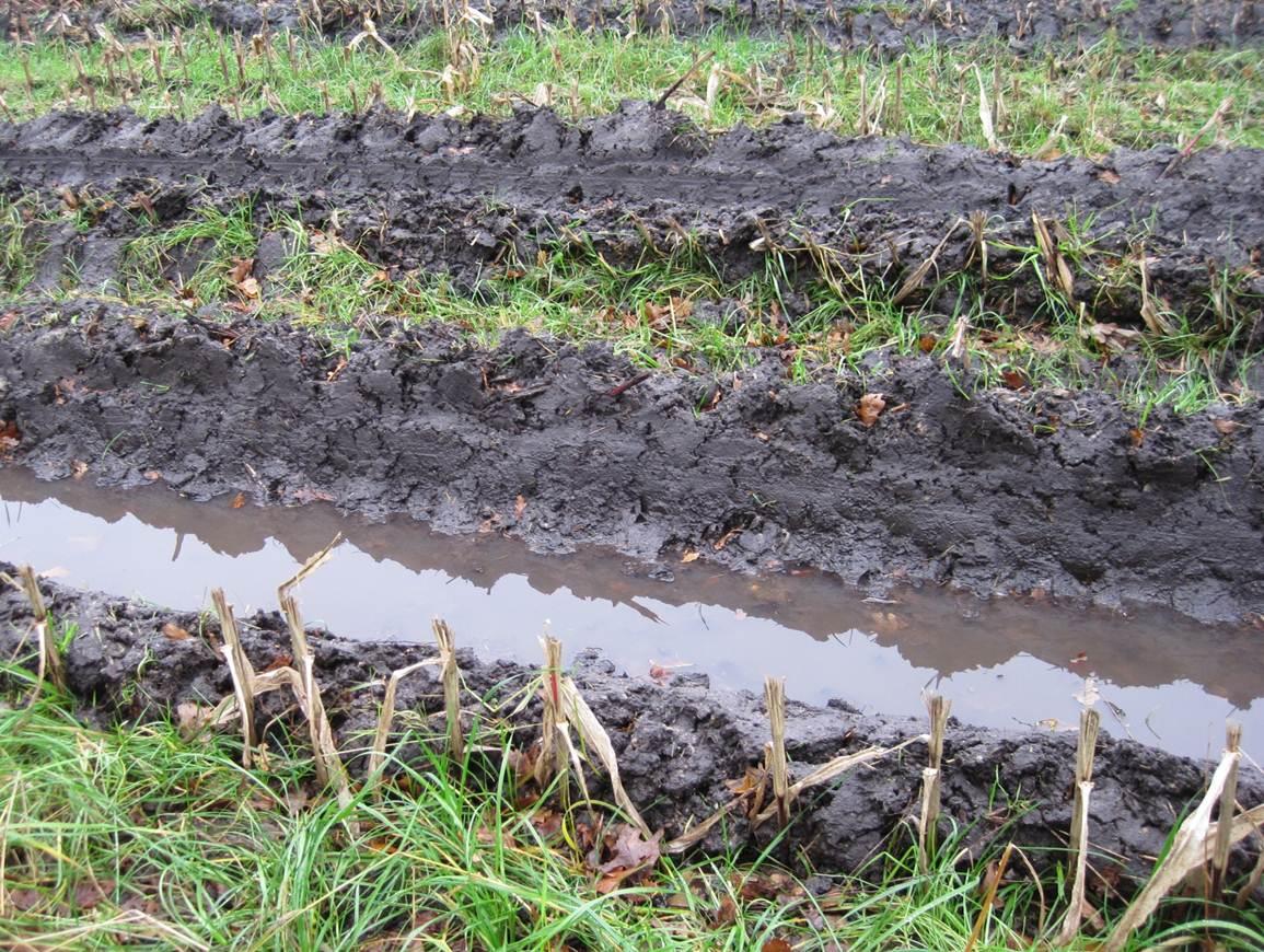 2 dezember 7 grad celsius weihnachtsmonat im agrarland for Boden nass aufnehmen