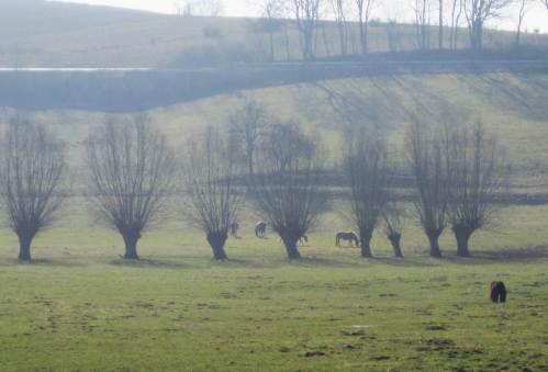 Pferde - Kopf - Weiden.
