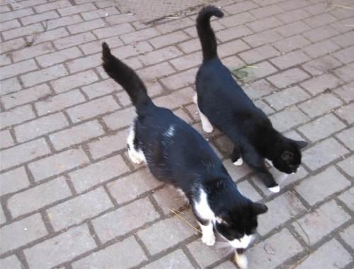 Bio-Katzen.