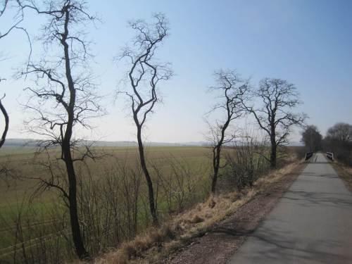 Nur noch selten zu sehen - Baumreste aus Bahnzeiten, Robinien (hinten eine Eiche).