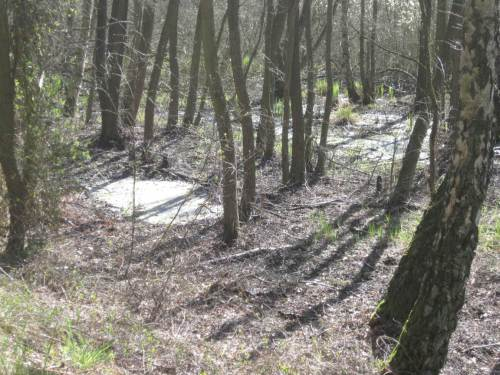 Sonne und längere Trockenheit lassen die Bruchwaldgewässer zusammenschrumpfen und haben neben Pollen allerhand andere Biofilme auf den Wasseroberflächen entstehen lassen.