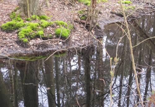Leuchtendes Moos-Grün und Spiegelung im moorigen Wasser.