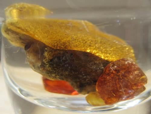Neben all dem Getier haben wir auch Pflanzliches gesehen und dieses mitgenommen - hier im Schnapsglas nicht mit Schnaps, sondern Wasser von Abendsonne durchleuchtet aufgenommen.