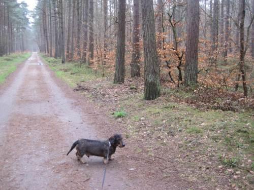 In vielen Nadelforstbeständen ist die laufende Umwandlung in Misch- bzw. Laubmischwald deutlich.