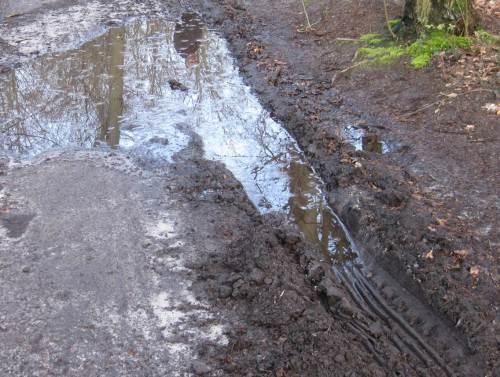 Ganz gegen Ende hat es dann tatsächlich noch geregnet - ein wahrer Segen nach allzu trockenem März und April. - Wagenspuren im Wald füllten sich. Und - wieder ein Mysterium? - hier guckt doch eine Nixe aus dem Nass!