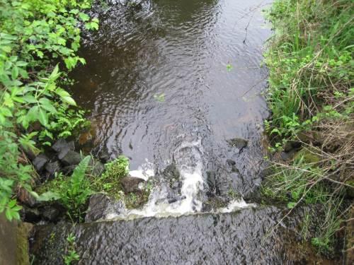 """Der Jilsbach führt fast kein Wasser mehr. - Warum der Absturz hier im NSG nicht längst durch Stopp der Unterhaltung """"weg"""" ist, frage ich mich seit den 12 Jahren Wasserrahmenrichtlinie. - Aber das Agrarland Niedersachsen ist ein Fall für sich."""