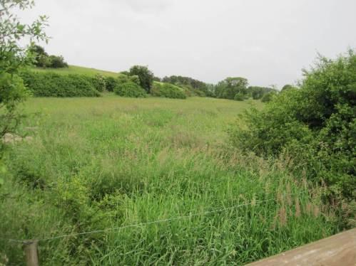 Die Marbeck, ohne Baumsaum noch an dieser Stelle, ist fast sommertrocken und völlig zugewachsen. Im Hintergrund die Heidehöhen, durch Viehbesatz frei gehalten.