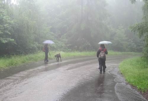 Von der Seite aus unbefestigtem Weg kommt ein erdbrauner Zufluss - Hundewetter!