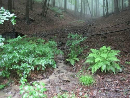 Wir haben die Straße verlassen und sind schon einige Etagen tiefer. Ein anderer Sturzbach trifft unseren Waldweg.
