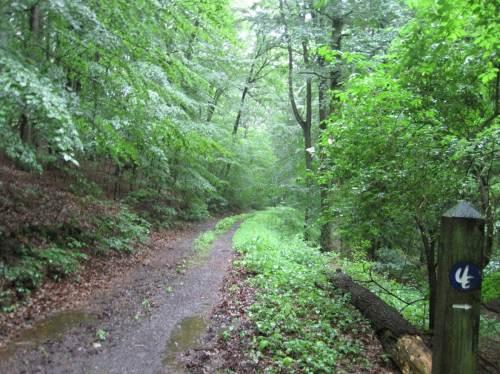 Na also: Wir haben den richtigen Weg gefunden, rechts steil runter gehts auf den Urwaldsteig Edersee.