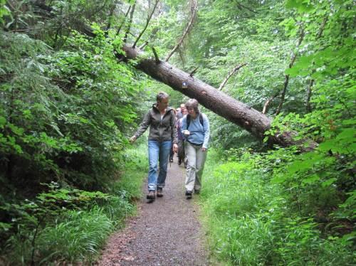 Wanderwege im Wald werden nur freigemacht, wo wirklich nichts mehr frei ist. Hier ist noch viel möglich - wir sind ja beweglich.
