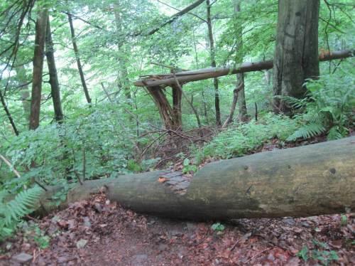 Totholz in vielerlei Form ist zu sehen, stehend, gebrochen, gefallen, liegend - wichtiger Lebensraum.