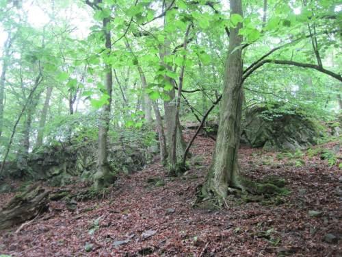 Überraschung - Linden bestimmen hier ein kleinklimatisch wärmeres Waldareal.