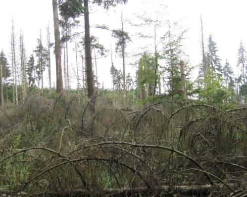 Weiter geht`s durch den Wald: Leben und Tod und neues Leben, alles dicht beisammen in Nadel-Laub-Mischwald - steter Wandel.