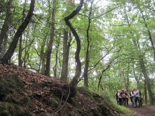 Wieder auf dem gemeinsamen Wanderweg: Bizarre Baumformen auf kargem Grund, dies sind uralte Bäume - auch wenn sie gar nicht so aussehen.