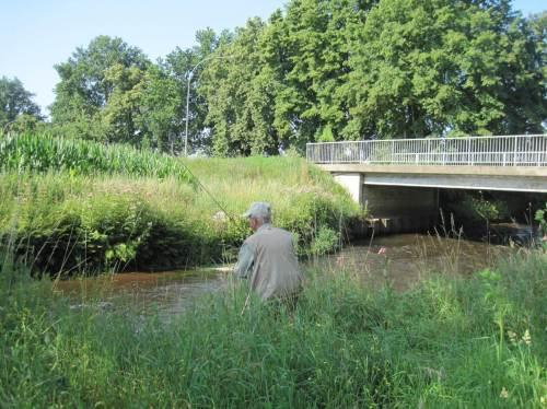 Das weiss natürlich der erfahrene Forellenbachangler längst. :-)   Er wartet allerdings darauf, dass endlich die Gewässerrandstreifen wieder hergestellt werden, die rechtswidrig auf der gegenüberliegenden Seite vom Mais okkupiert sind.