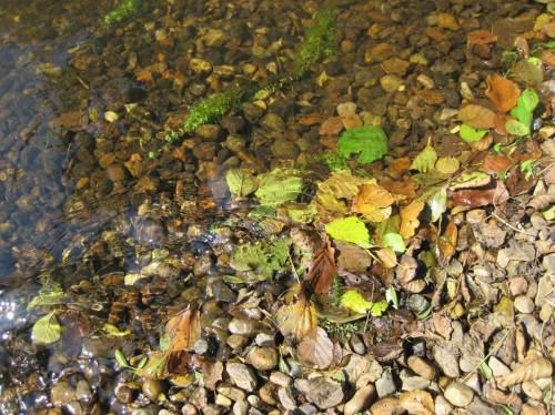 Dieser Gewässergrund bietet Wasserpflanzen gute Ansiedlungsmöglichkeit und hält Treibsel wie Erlenblätter zeitweilig zurück. Darauf baut die Nahrungskette des Forellenbachs auf.