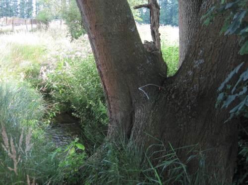 Übergang grell besonnt zu naturnah beschattet, Kies in guter Gefällestrecke