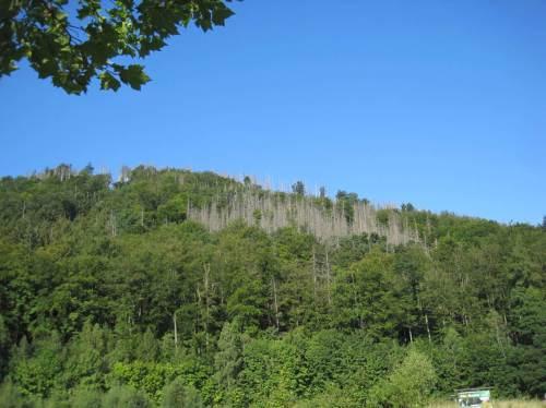 Eindrucksvoll, wie auch schon in meinen Einträgen vom Nationalpark Kellerwald beschrieben, die Borkenkäferschäden in Nadelwaldmonokulturen. Ein Borkenkäferlehrpfad wird hier angeboten - wir wandern aber im Tal weiter.