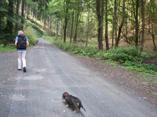 Wie so oft im Harz: wenn es nicht bergab geht, geht es bergan.