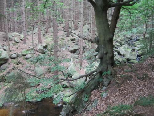 Große Felsbrocken an kleinem Bach, unten links ein größeres Strudelloch.