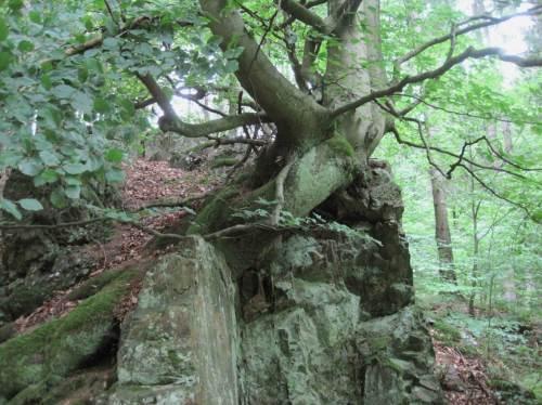 Holz und Stein - ist das schon Symbiose