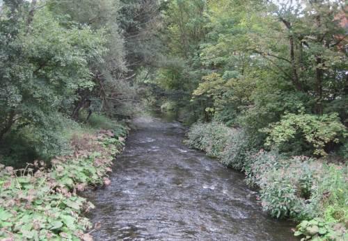 Bode bei Rübeland, Pestwurz vs Drüsiges Springkraut