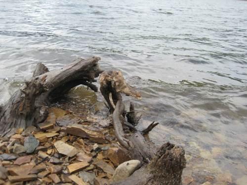 frei gefallene Reste versunkener Bäume