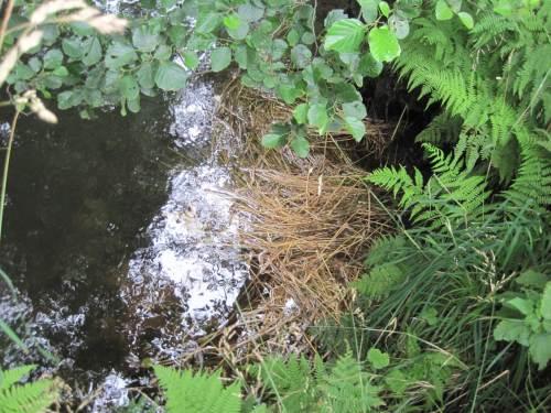 Stroh vor Erlenwurzel in der Seeve