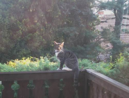 Katze aus Esszimmerfenster