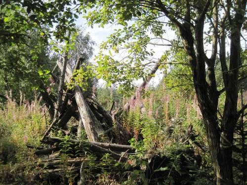 Natur erobert Menschenwerk, Herbstaspekt Ring der Erinnerung