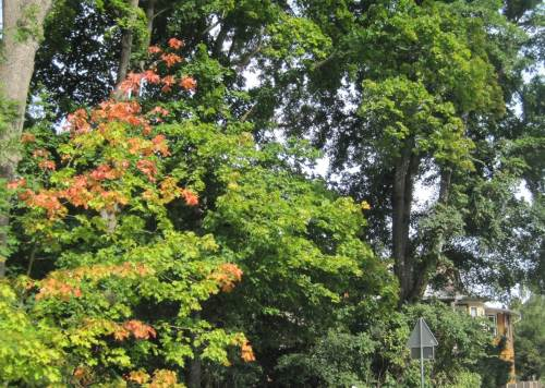 Wernigerode, der Herbst naht