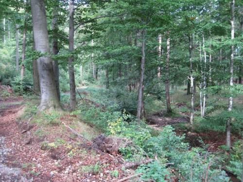 Bach im Sandtal-Buchenwald