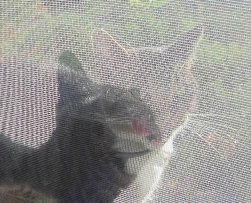 Katzenzunge hinter Gitter