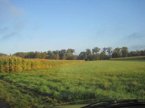 Seeve Hörsten, Mais bis auf die Kante
