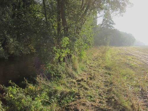 Restbaum Seeve Hörsten, Wurzelteller rechts weggepflügt