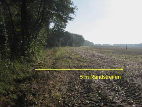 Haselstecken zeigt 5 m Randstreifen - Text - neben pflug-entwurzeltem Restbaum