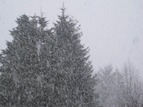 Ja, ist denn Weihnachten?! - Nicht vergessen, die erste Februarhälfte ist im Norddeutschen Tiefland eher für Schnee gut - ist ja schließlich noch Winter.