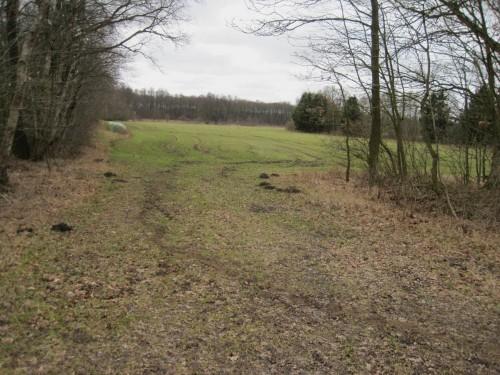Begüllte Intensivwiese, die unmittelbar an den Todtgraben, ein restauriertes Kiesgewässer, grenzt.