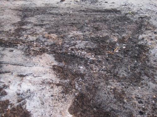 Wer Augen hat zu sehen, der sehe: wo nicht gerade mooriges Gelände angetroffen wird, zeigt sich im freigelegten Mineralboden die Moräne mit Sand bis Geröll.