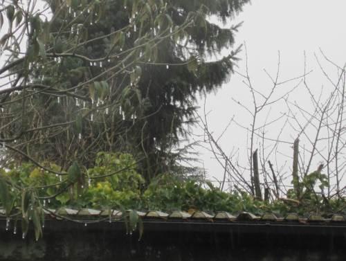 Regen und Frost - kleine Eiszapfen überall.