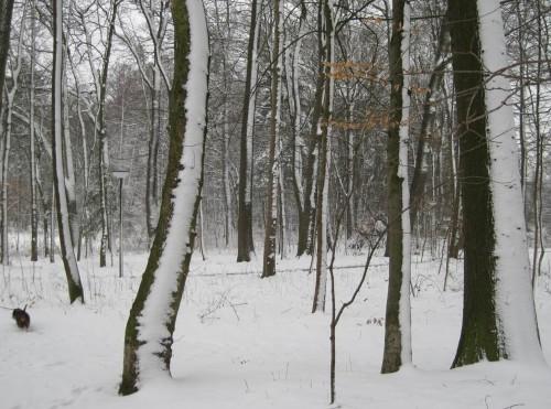 Wanderung im Wald - die Bäume halbweiss durch den vorherigen Schneesturm.